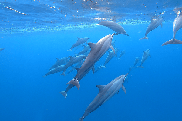 PRIVATE MORNING DOLPHINS EXPERIENCES